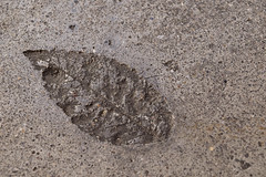 fall forever in concrete (L. Paul) Tags: park concrete leaf time cement mountpleasant iowa imprint henrycounty