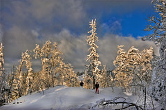 Last winter  light , and I am walking with my Nikon camera taking it with me... No. 3569. (Izakigur) Tags: winter light sun snow tree ice topf25 fog clouds photography licht twilight nikon europe swiss topf300 nikond700