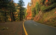 Nathiagali Road, Abbottabad (Hasankazmi) Tags: sunset green abbottabad nathiyagali hasankazmi