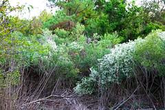 WuNDeRLaND de' ALiCe` (skeetslayer) Tags: flowers trees plants beauty everywhere ohmy neverending gregrobinson