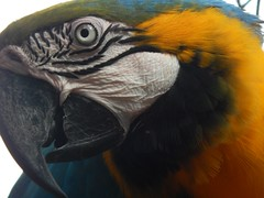 As Cores do Brasil (josericardojunior) Tags: arara fozdoiguaçu parquedasaves coresdobrasil