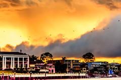 20151129-135-Brisbane River Bat Cruise.jpg (Brian Dean) Tags: cruise river au bat australia brisbane queensland brisbaneriver