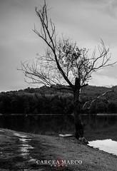 La_Via_Del_Pescatore (MARCOCARCEAPH) Tags: sky bw italy lake tree water lago boat blackwhite fisherman nikon barca italia dam tuscany toscana albero pescatore arezzo valdarno diga