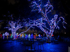 Vitruvian Lights 2015-9 (MikeyBNguyen) Tags: us texas unitedstates christmastree christmaslights christmastrees addison vitruvianpark vitruvianlights