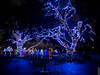Vitruvian Lights 2015-9 (MikeyBNguyen) Tags: us texas unitedstates christmastree christmaslights christmastrees addison vitruvianpark vitruvianlights