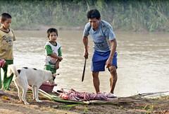 Carne de monte (PawelBienkowski) Tags: amazon shipibo pisqui amazontribe amazontribes amazonfood amazonhunting