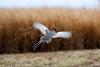 South Dakota Luxury Pheasant Hunt - Gettysburg 65