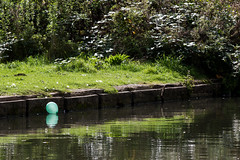 untitled (robwiddowson) Tags: balloon green greenballoon nature natural landscape water river reflection robertwiddowson photo photograph photography image picture