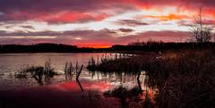 Pond Sunrise wm (Terry L Richmond) Tags: water reflection sunrise clouds detail terryrichmond canon6d canon1740 alberta pond colorful