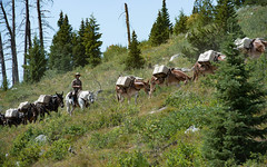 Mule Team in the West (Karen McQuilkin) Tags: muleteaminthewest grandtetonnationalpark wyoming horses ride packtrip mulekarenmcquilkin
