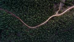 Y (sgsierra) Tags: dron phantom bosque rboles y la rioja nalda pino otoo