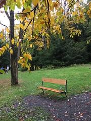 Swallow Falls SP ~ HBM! (karma (Karen)) Tags: swallowfallssp garrettco maryland mdstateparks benches trees fallcolor paths trails hbm iphone