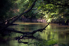Red Oak Creek, Meriwether County, GA (Mike McCall) Tags: copyright2016mikemccall photograph image photo georgia usa meriwethercounty redoak creek covered bridge 1840s antebellum imlac