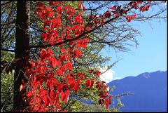 Autunno (ninin 50) Tags: autunno rosso nature bellinzona ninin