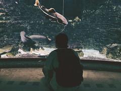 Acquario (Bina Barbato) Tags: budapest city trip acquarium fish man dark vintage fujifilm zoo summer
