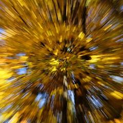 Explosion (PetitGrand) Tags: fuji qubec canada nature couleur automne arbre lumire