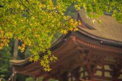 DSC_0765 (megumi.ram) Tags: japan nikon nature autumn    shrine