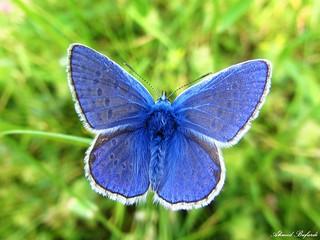 Butterfly 1069