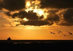 Fort Geese Sunrise (Peanut1371) Tags: sunrise sky orange clouds sun fort geese