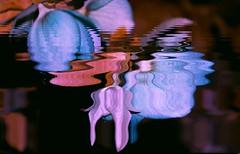 La fleur qui coule (Sebmanstar) Tags: couleur color creative creatif creation art pentax photography image imagination imagine manipulation research europe europa france french nature digital explore