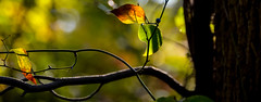 """""""All good things must come to an end."""" - Geoffrey Chaucer (tomk630) Tags: virginia nature lifecycle forest bokeh light usa"""