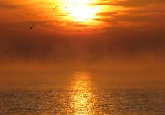 IMG_0067x (gzammarchi) Tags: italia paesaggio natura mare ravenna lidodidante alba sole nuvola riflesso animale uccello volo monocrome stormo