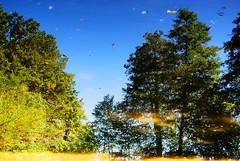Reflection (Sareni) Tags: sareni slovenia slovenija maribor mb park citypark mestnipark reflection water voda tree trees drvo drvece colors boje light svetlost leaf leaves list lisce summer leto august 2010 twop