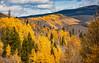 Aspens 4 (PhotoBobil) Tags: aspens colorado fall grandlake