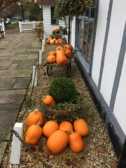 Halloween (My photos live here) Tags: halloween cousley wood wadhurst east sussex england i phone 5s old vineyard pumpkin all hallows eve road