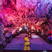 Saint Michael's Cave, Rock of Gibraltar, Gibraltar