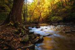quiet glen (R. Welch) Tags: canoneos5dmkiii fall grimescreek grimesglen naples naplesny newyork autumn colorful creek forest gorge leaves nature stream water waterfall waterscape rocks waterfalls trees beautiful sun light shadow tree landscape
