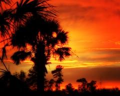 "Palm sunset (Paul"") Tags: northcarolina lumberton sunset palm orange orton hss"