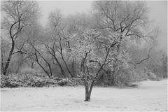 Sony *312 (KKS_51) Tags: sonyalpha7ii industriepark hchst main schnee