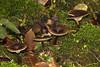 Trichterlinge , NGIDn1324879307 (naturgucker.de) Tags: ngidn1324879307 naturguckerde trichterlingunbestimmtclitocybeindet weinstadt mühlhöfle cvolkerherdtlepilz