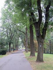 IMG_5468 (jaglazier) Tags: 2016 91716 bielefeld copyright2016jamesaglazier deciduoustrees germany northrhinewestphalia paths september trees clouds gardens parks nordrheinwestfalen