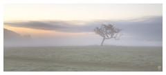Memories of a Misty Morning.. (fearghal breathnach) Tags: sunrise clouds cloudsstormssunsetssunrises fog mist mistymorning phoenixpark lonetree tree foggy dawn papalcross dublin ireland earlymorningfog