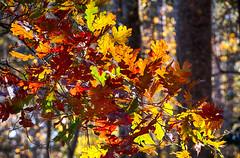 DSC09054-56_HDR (Capt Kodak) Tags: autumn chattahoocheerivernationalrecreationarea fall hdrefexpro2 madefrom3images medlockbridgepark nationalparkservice nikcollectionbygoogle niksoftware photomerge