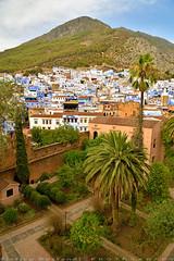 Garden with blue houses background (T Ξ Ξ J Ξ) Tags: morocco chefchaouen sefasawan d750 nikkor teeje nikon2470mmf28 blue city kasbah