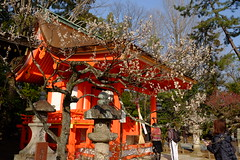 日本 京都奈良5日遊 Koyto&Nara JAPAN_20160225_315 (PS612) Tags: 日本 京都府 北野天滿宮 kitanotenmangushrine sagano kyoto japan spring fujifilmxt10