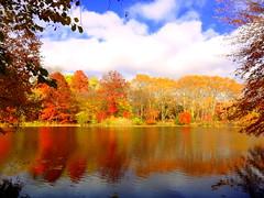 Lake Reflection (dimaruss34) Tags: newyork brooklyn dmitriyfomenko image sky clouds fall autumn prospectpark reflection foliage