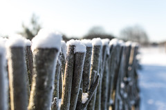 Snow (`TOMS`) Tags: latvia latvija snow countryside white nikon nikkor 35mm f18g f18 afsdxnikkor35mmf18g nature outdoor fence depthoffield