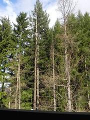 DSCN7483 (Gianluigi Roda / Photographer) Tags: apennines autumn lateautumn trees fir larch
