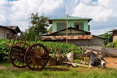 20161014-IMG_2045 (Konrad K. M.) Tags: myanmar kalaw shan