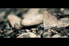 Metamorfosis (dohtem) Tags: naturaleza macro nature up field animal butterfly bug photography close seven campo cerca mariposa bicho fotografa macrophotography svn macrofotografa