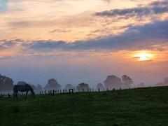 Daybreak (Tobymeg) Tags: horse sunrise field sky sun cloud horses scotland equine panasonic fz72 mist