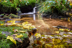 autumn near Hornberg forest (Klaus Steinert) Tags: autumn water herbst explore bach wald schwarzwald herbstfarben wildbach greatphotographers platinumheartaward greaterphotographers