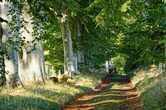 Beech walk. (artanglerPD) Tags: family trees sunlight dogs shadows walk autumncolours beech
