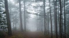 Nebel im Wald (Extrud) Tags: nebel herbst natur ukraine landschaft wald yalta      herbstfarben ef24105mmf4 dolossi canoneos5dmarkiii