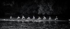 JOURNEE_HUIT-96 (AvironSaintais) Tags: bw river boat sony rivière rowing a7 niort ramer aviron
