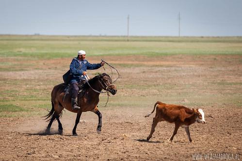 Kazachski pasterz
